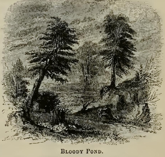 Bloody Pond, Illustration