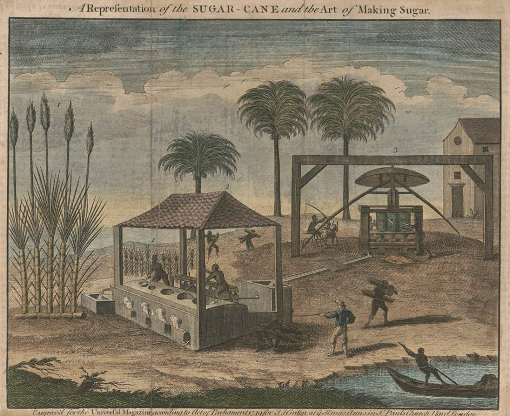 Sugar Cane Plantation
